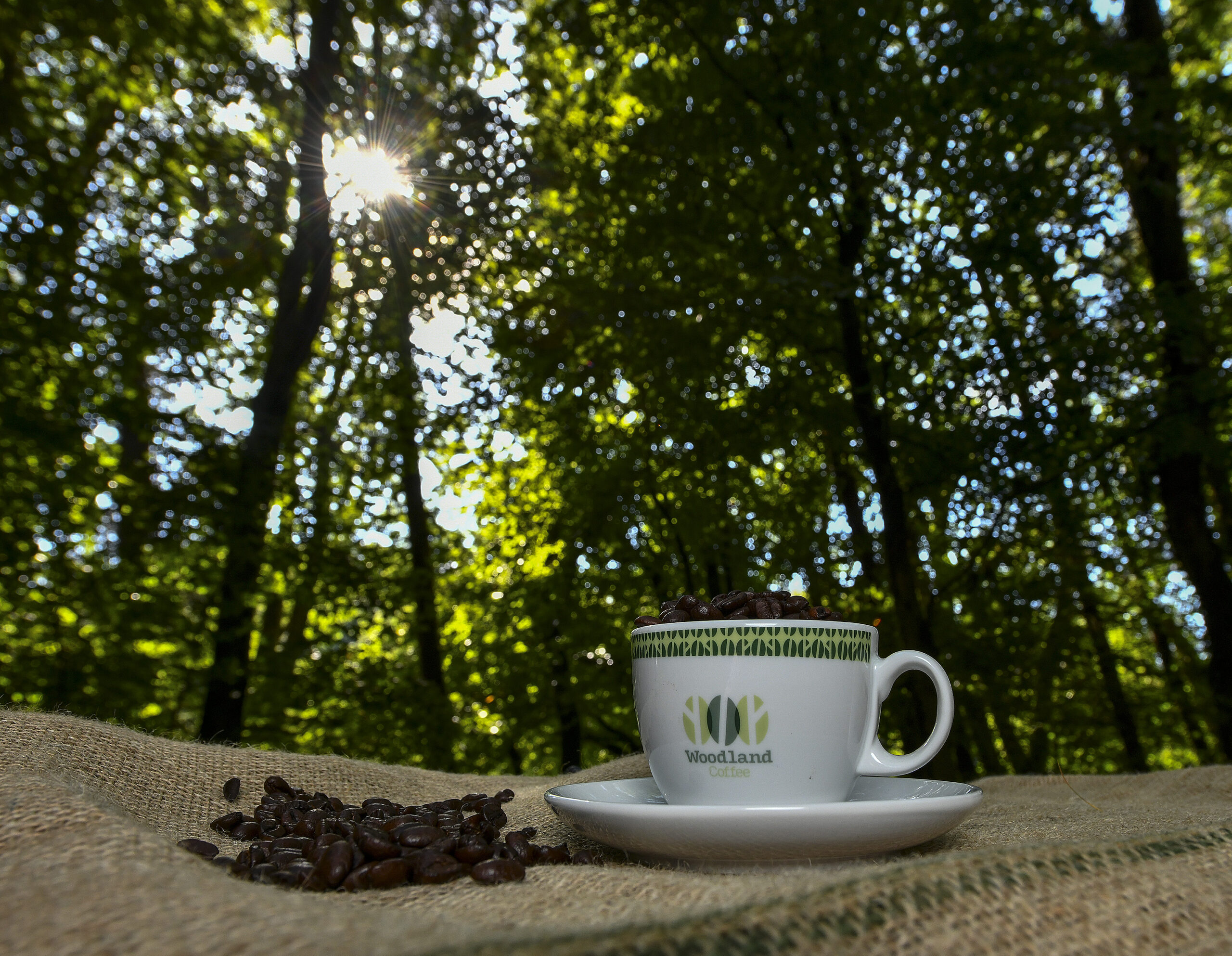 Woodland Coffee in woods