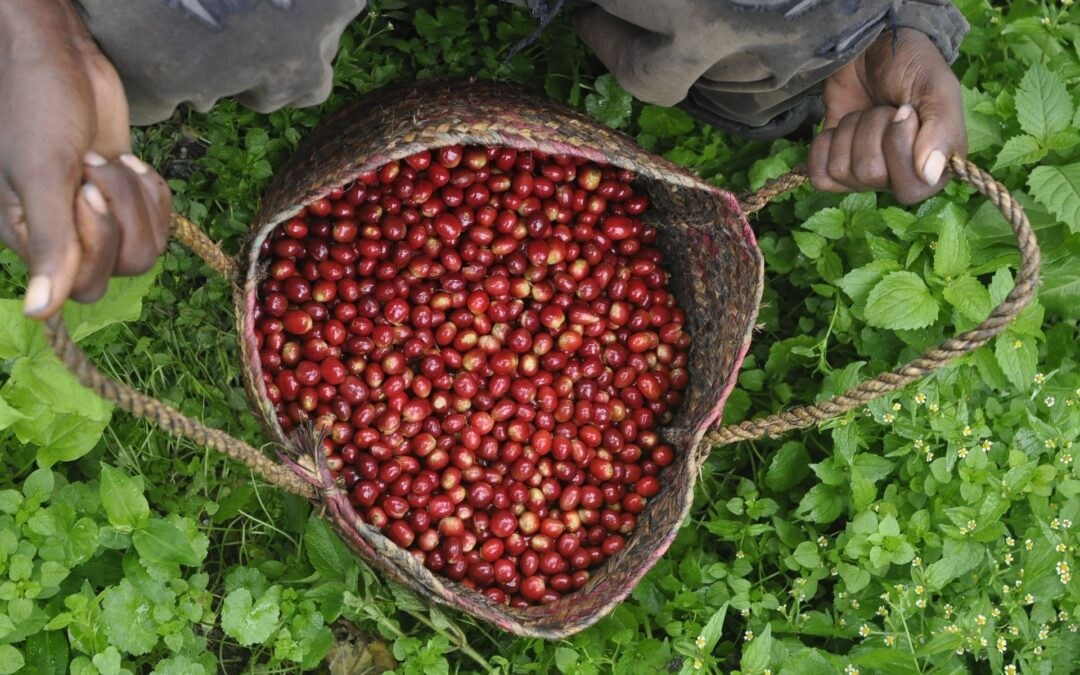 The benefits of Rainforest Alliance Certified™ Coffee