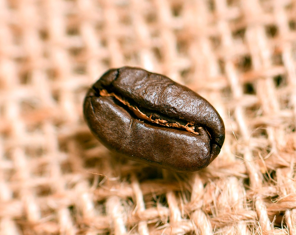 Woodland Coffee Bean
